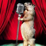 groundhog day cabaret